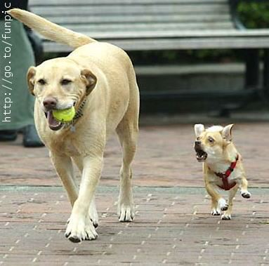 Give my ball back!