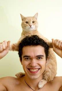 Cat/shoulders