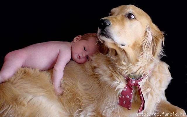 Baby on Dogs back