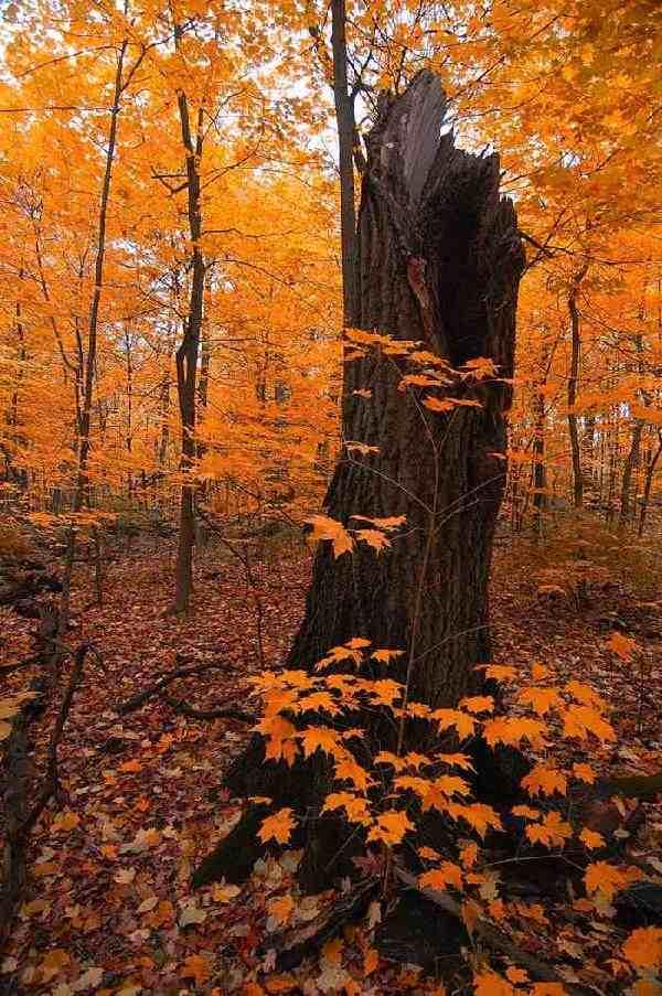 Fall vertical