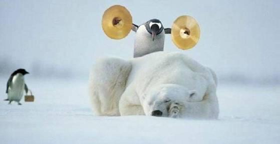 Polar Bear Wakeup