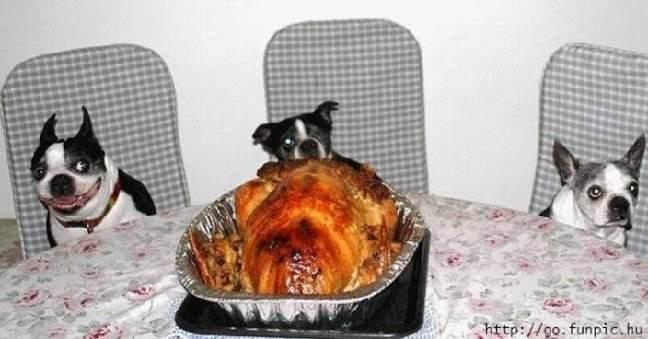 3 dog turkey