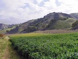 Windrose Landscape