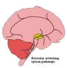 Your Reticular Activating System