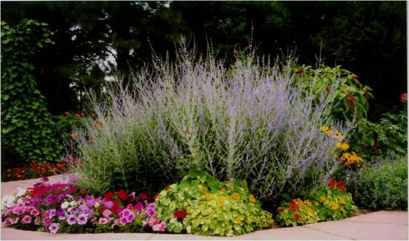 Annuals Perennials