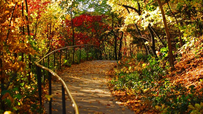 Excelsior steps in the fall