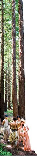 green gala trees taller