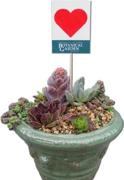 succulent dish garden !