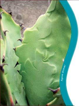 plant sale card