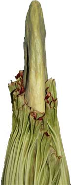 Little Stinker