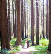 bride in redwoods