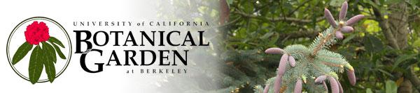 December 10 conifer banner
