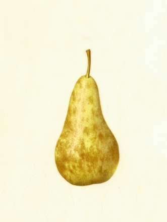 pear by Catherine Watters