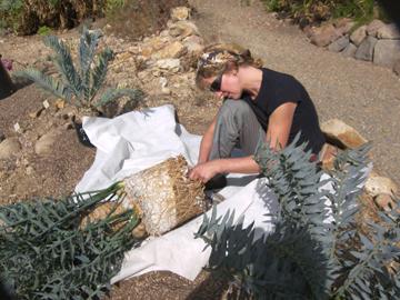 conservation plants
