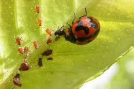 natures way biological pest control