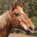 Danny the Lesson Horse