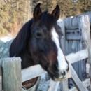 Dakota lesson horse