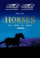 Horses at the IMAX