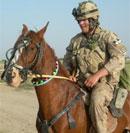 afghan horse