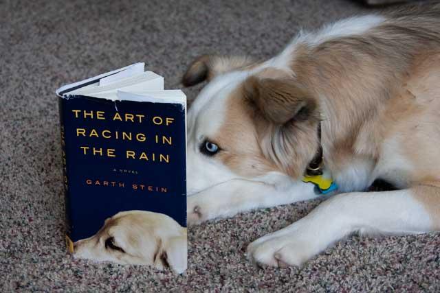 Hollie reading ARR
