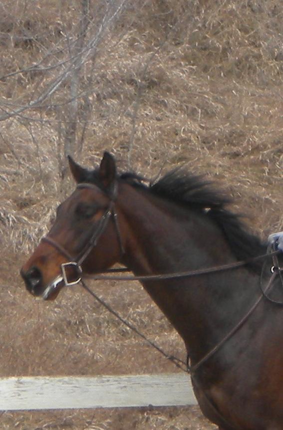 Enzo's Show Horse