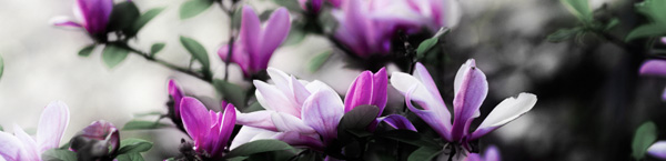faded-purple-flowers.jpg