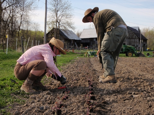 planting may