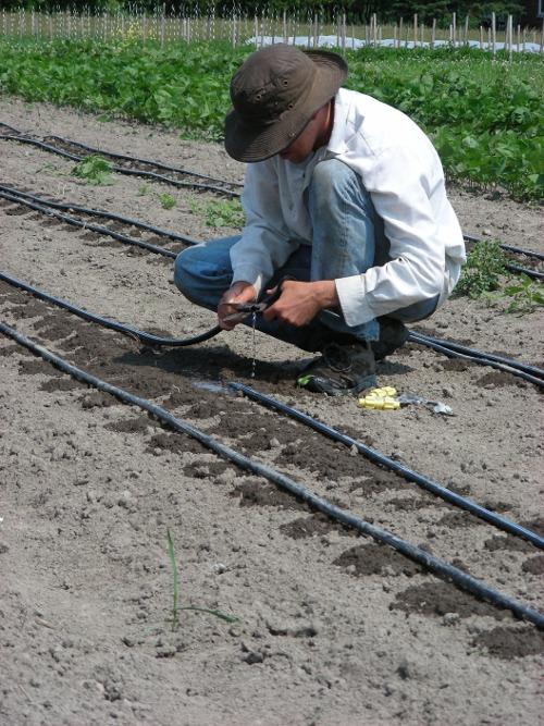 Steve Irrigation Fix