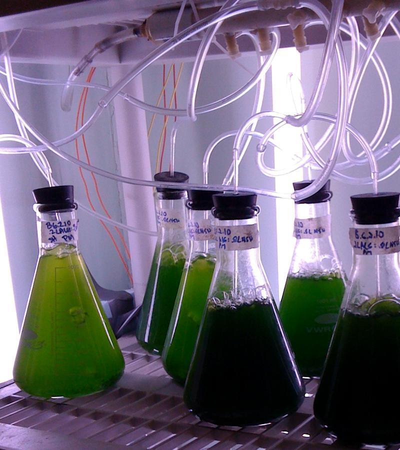 Algaetubes