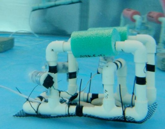 SP underwater