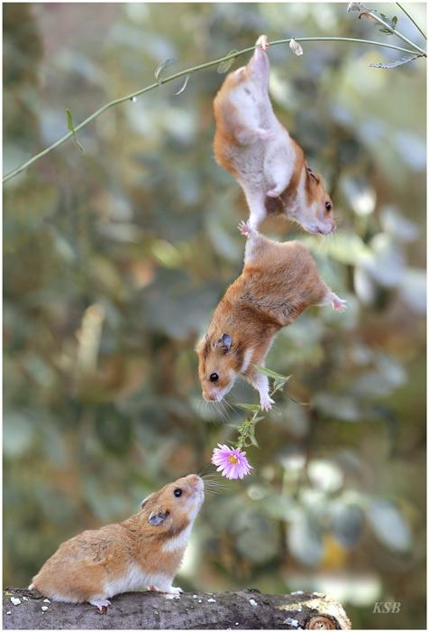 mice with flower