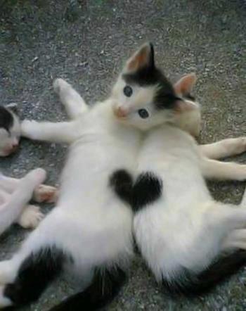 kittens forming heart