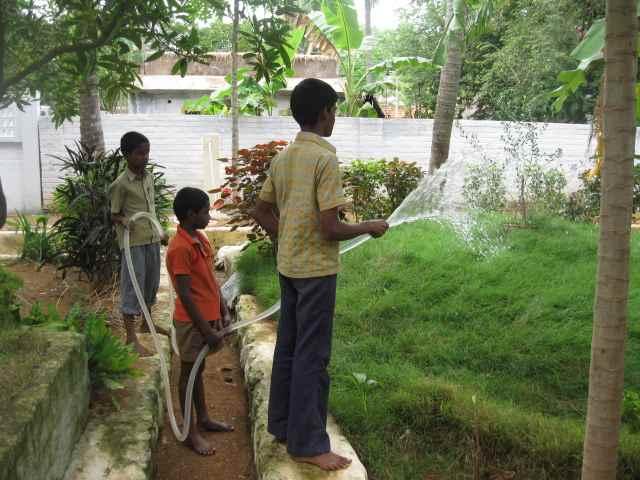 3 Boys Watering Trees