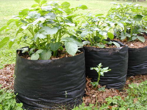 container grow bags