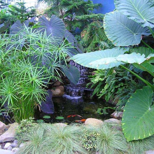 BC pond