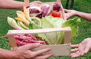 basket of veg