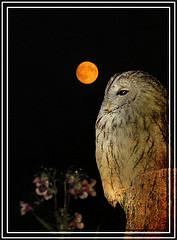 Wisdom Owl, Alice Poplorn, Flickr