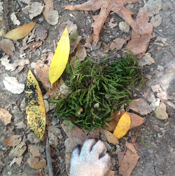 leaves are crunchy under-paw