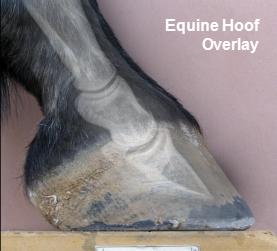 Equine Overlay