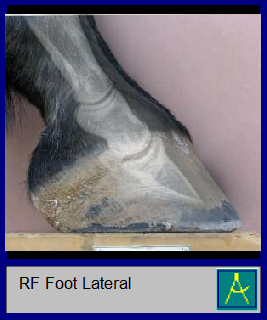 RF Foot Lateral