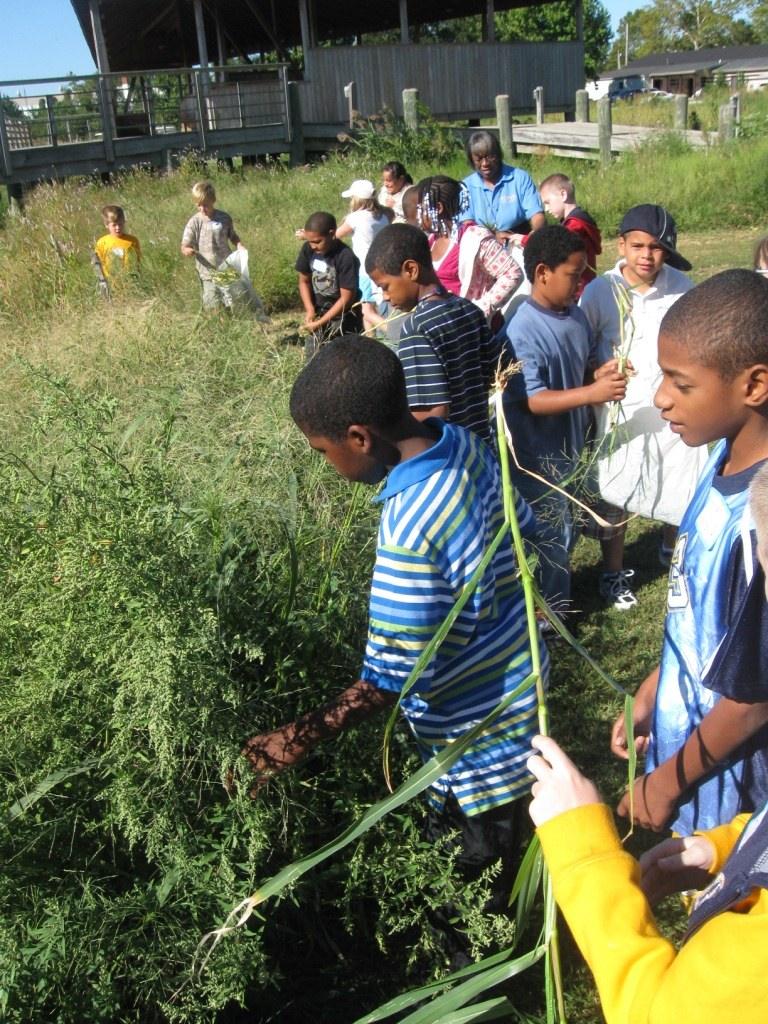Garnett Wetlands 2010