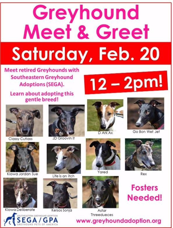 Greyhound adoption flier