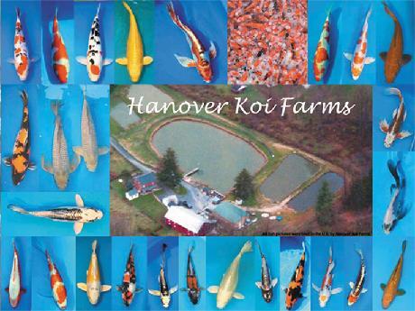 Hanover Koi Farms
