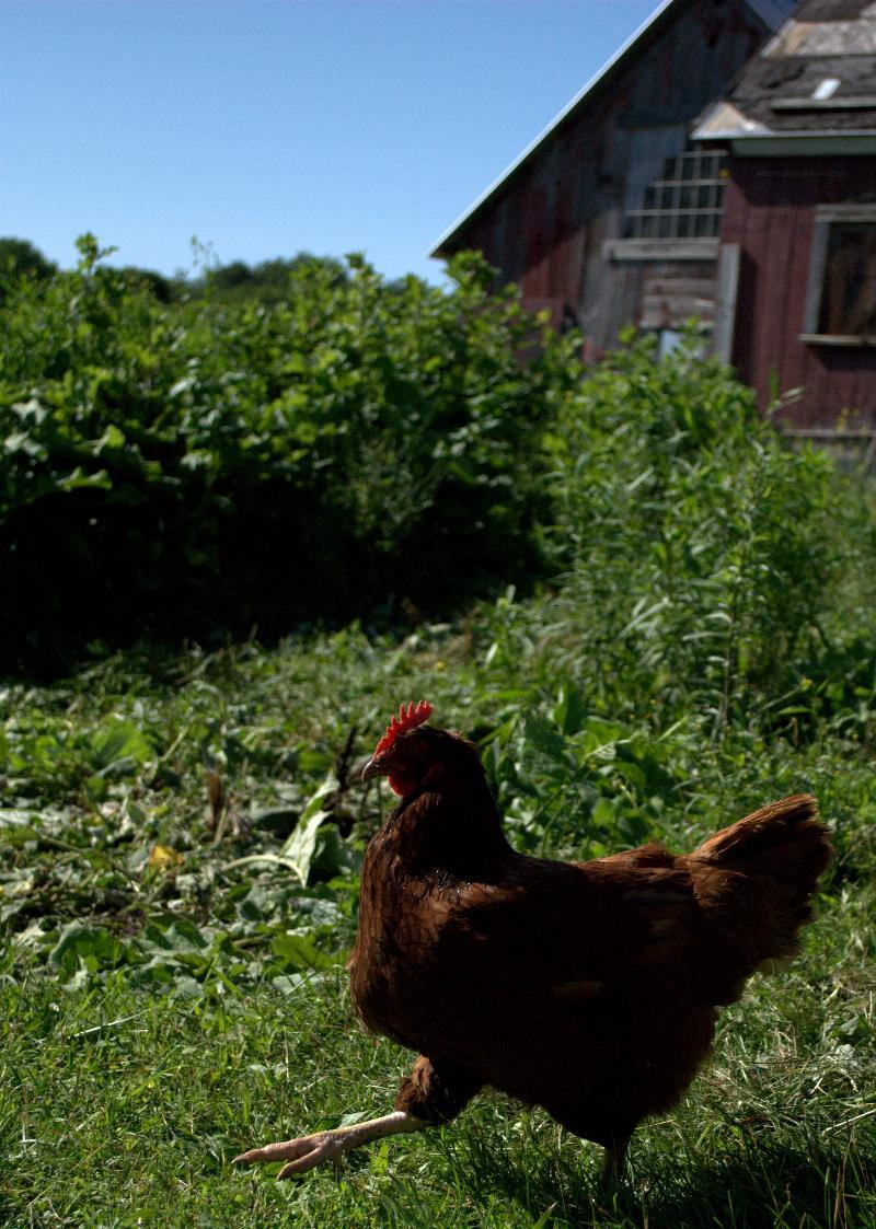 Mighty Food Farm by GI