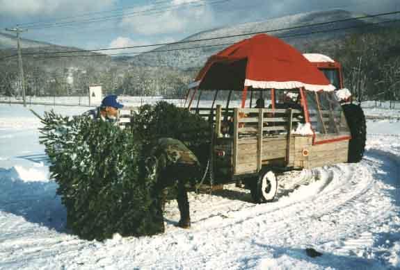 Winter Santa Ioka  Valley Farm