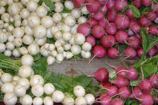 turnips HFM 2011 P Cherneff
