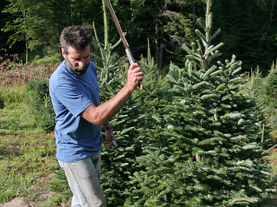 Justamere cutting tree