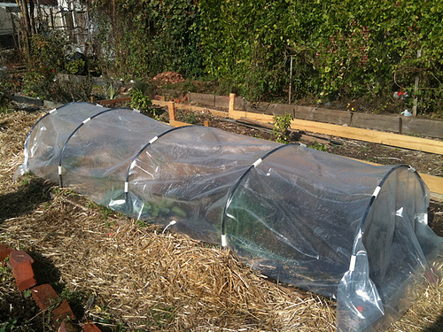 Hoop. cold frame Chewswise