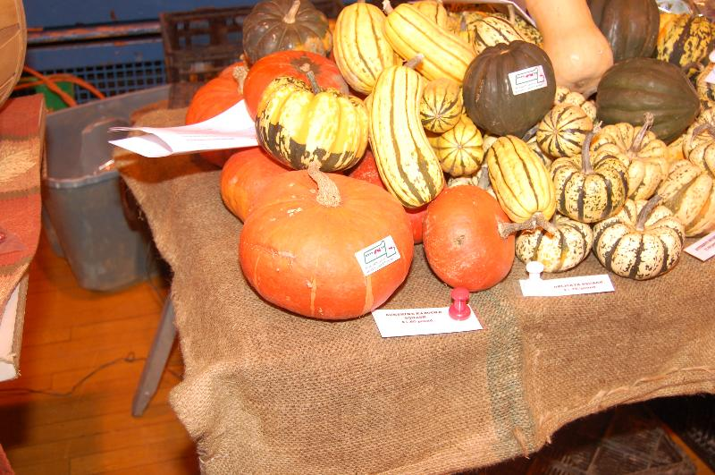 Pumpkins, squash at HFM GB 11.20.10