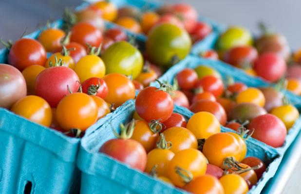 berkshire organics tomatoes